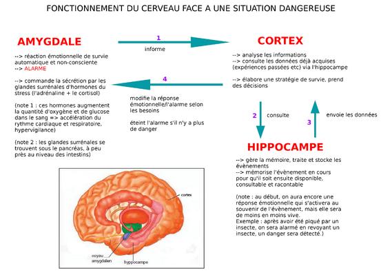 fonctionnement du cerveau face au danger