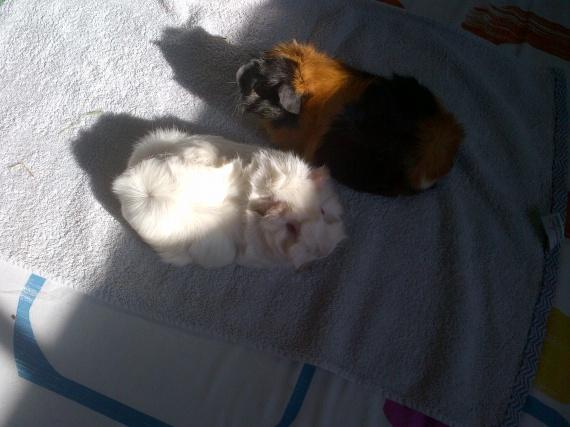 Maya et Gaya en plein bain de soleil