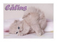 chat-calin_1_2