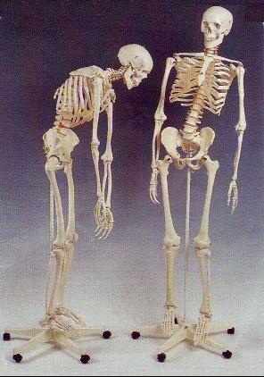 squelettes_181