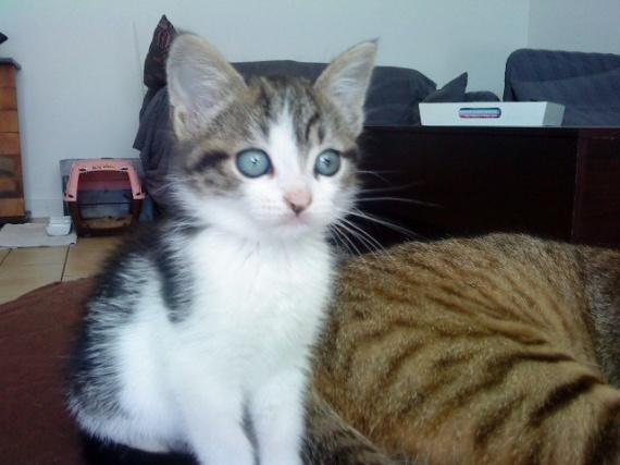Kitty 1 mois et demi
