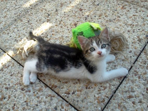 kitty presque 2 mois