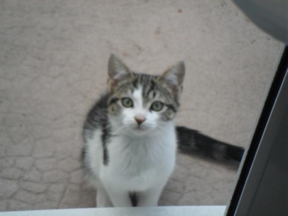 Kitty 3 mois