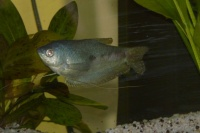 mon poisson