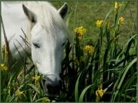 galerie-membre,cheval,cheval-018
