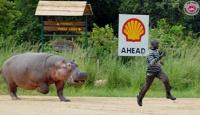 2007_viene-hipopotamo[1]