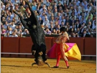 bull_Funny_Pics-s500x375-17812-580[1]