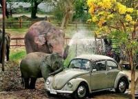 car_wash_elephant[1]