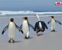 thumb-intus-impostera-penguin-[1]