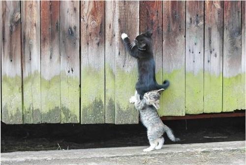 animal-animals-beautiful-cat-cats-cute-Favim_com-40066