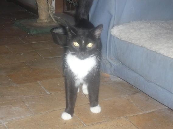 Chat noir et blanc avec chaussons blancs