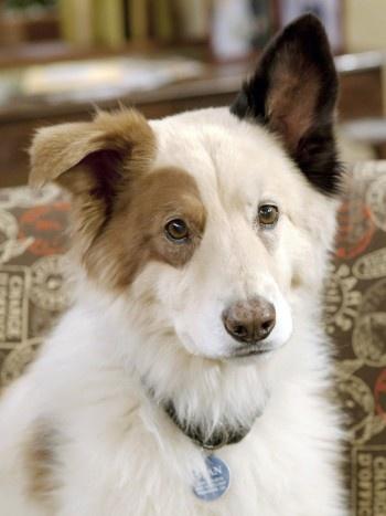 Stan #Doggyblog