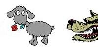 agneau loup