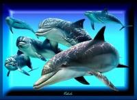 Magnifique ces dauphins !