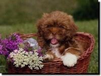 Le chien et les fleurs