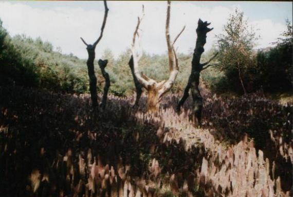 voyages-sites-visites-arbre-foret-broceliande-img