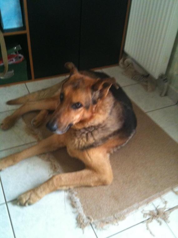 une boule rose dans la gueule de mon chien chiens forum animaux. Black Bedroom Furniture Sets. Home Design Ideas