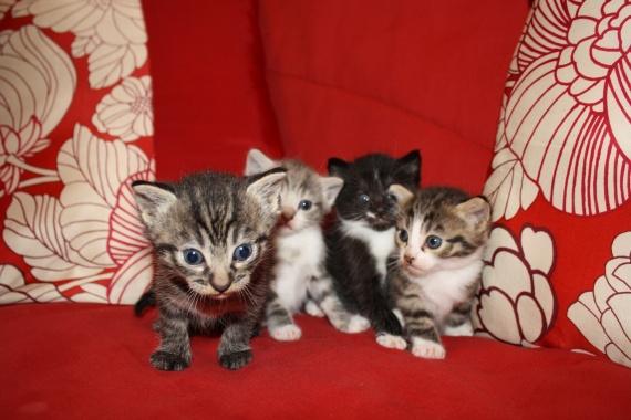 Mes 4 bébés