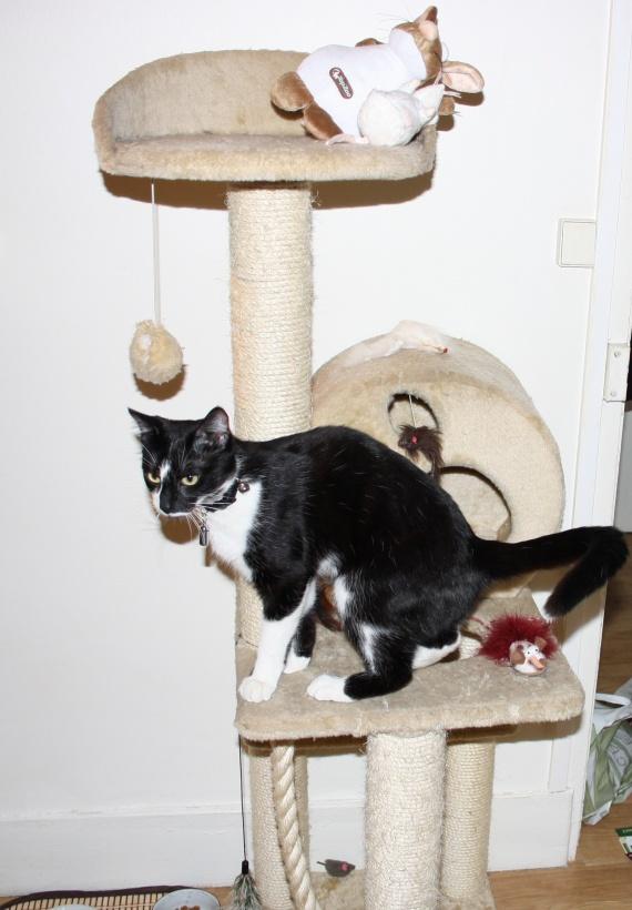 Arbre à chat1