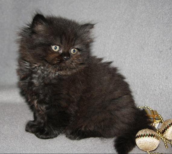 kittens%20rose%2014-12%20076