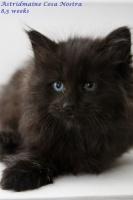 kitten1080