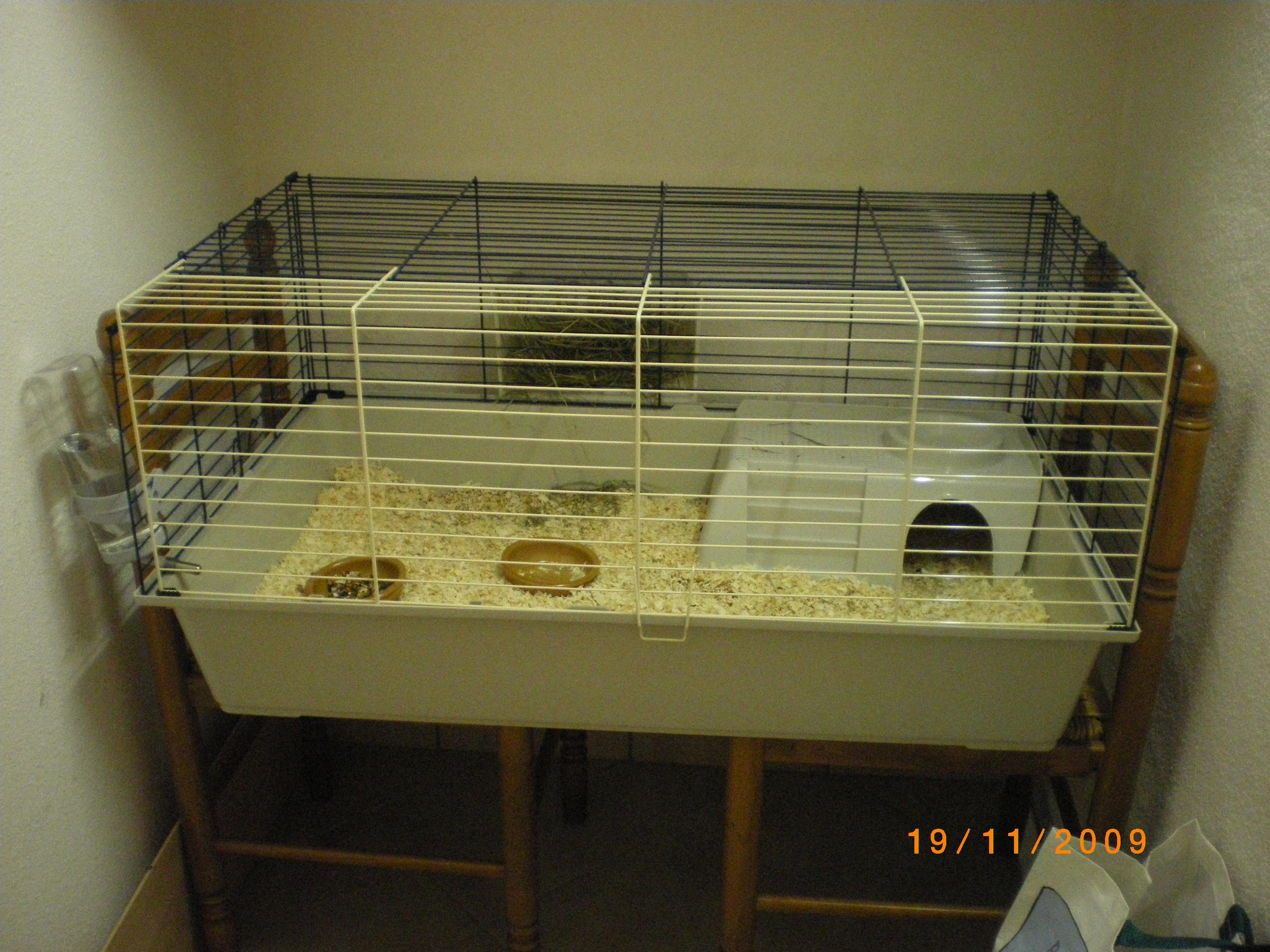 cage fifi mon cochon d inde fifi fifille2a photos. Black Bedroom Furniture Sets. Home Design Ideas