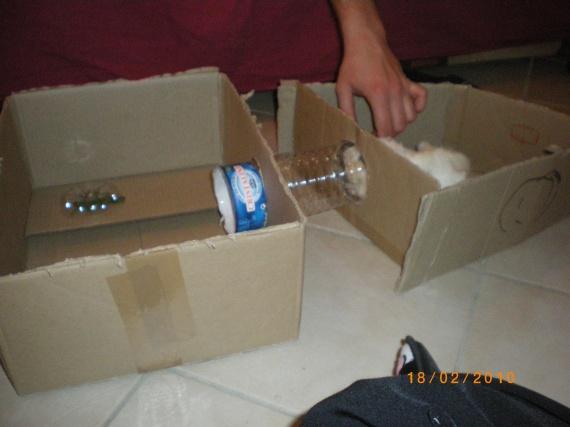 construction maison xd mon cochon d inde fifi. Black Bedroom Furniture Sets. Home Design Ideas