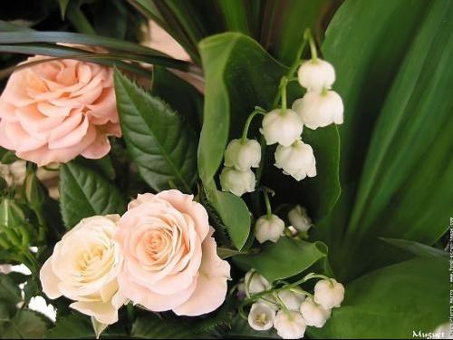 fleursfondecranmuguet16