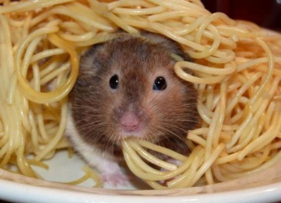 LES P'titesouris   - Page 21 Images-droles-insolites-souris-spaghetti-img