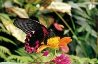 serre-aux-papillons-exotiques-261761