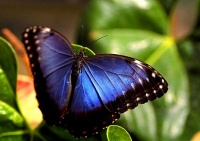 01papillon