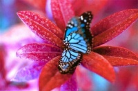 papillon-bleu-392301
