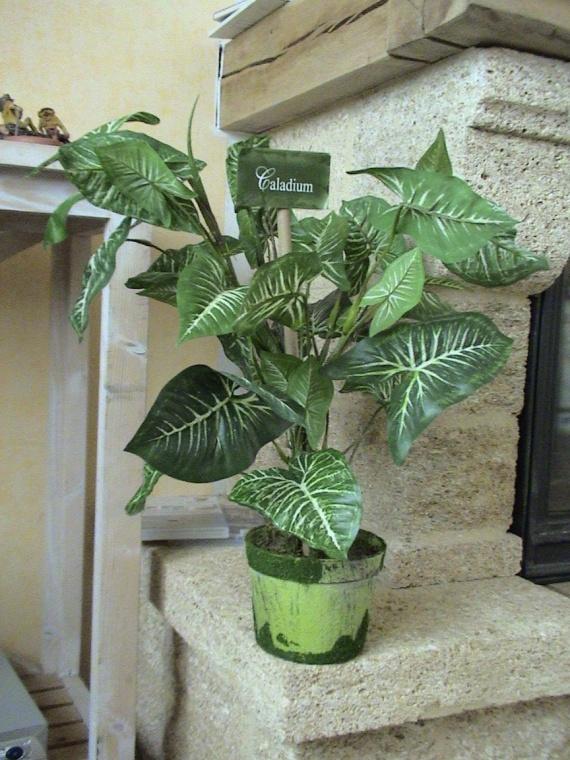 pothos plantes vertes artificielles glarinette photos club doctissimo. Black Bedroom Furniture Sets. Home Design Ideas