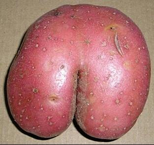 DTC-la-patate