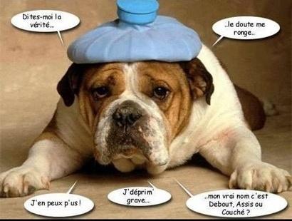chien_12-15723564ee
