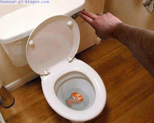 ykkikzdgpoisson rouge dans wc