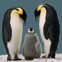 pingouin-le-nouvel-algorithme-de-Google