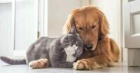 chien-et-chat-calin