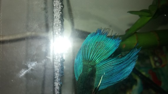 Blue Ivy 4