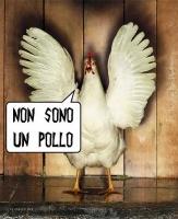 Il pollo Androu :lol: