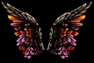 284345_angel_wings