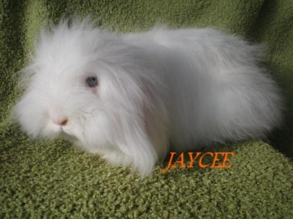 Jaycee2 (Maman de Bonnie)