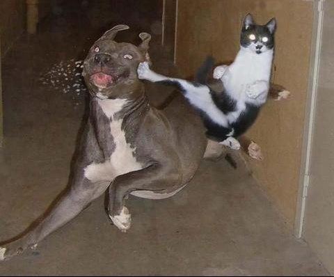 animaux-chien-chat