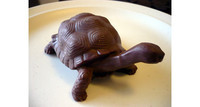 tortue (2)