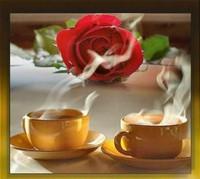 cafés (15)