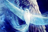 white_dove_fantasy_fly_wings_blue_bird_hd-wallpaper-1466586