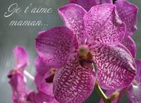 orchidée maman
