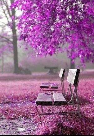 fond-ecran-violet-img