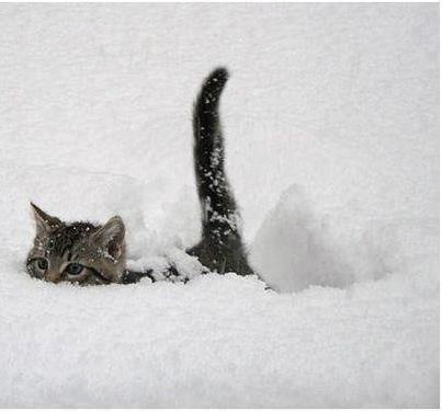 http://a.imdoc.fr/private/1/divers/ita/photo/9631041963/202200922e7/ita-chat-neige-img.jpg