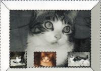 Artémice décédé le 31 octobre 2011 elle avais 3 ans environ